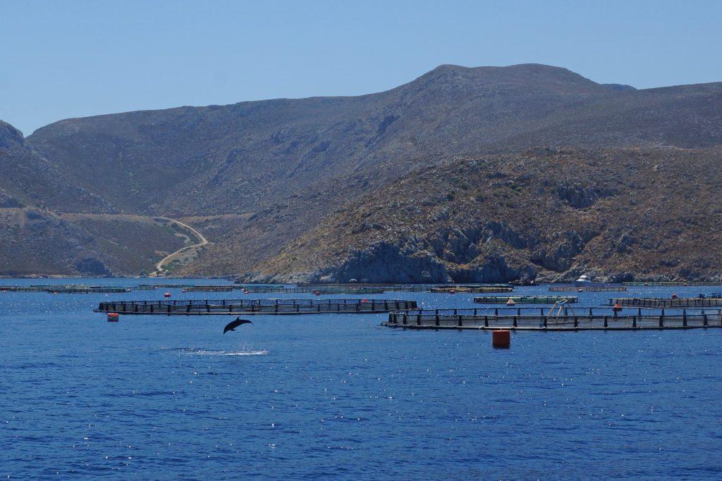 Kos-Delfin-3-Insel-Rundfahrt-Friederike-Boot