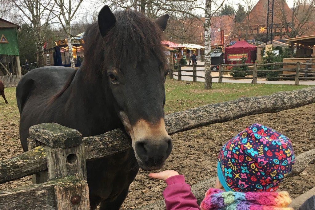 PENNY-Herzenswuensche-Pferd
