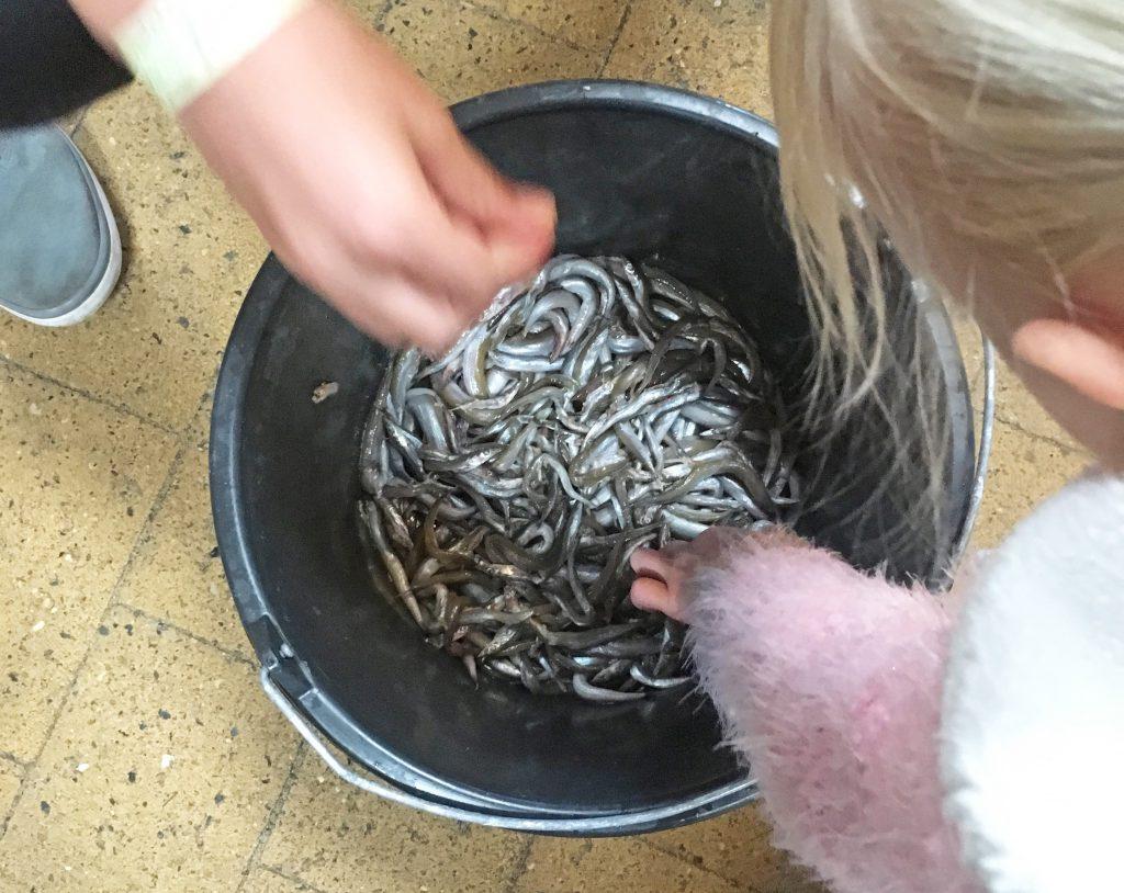 Futterfische-Aquarium-Thyborøn-Daenemark Urlaub Kinder Hund