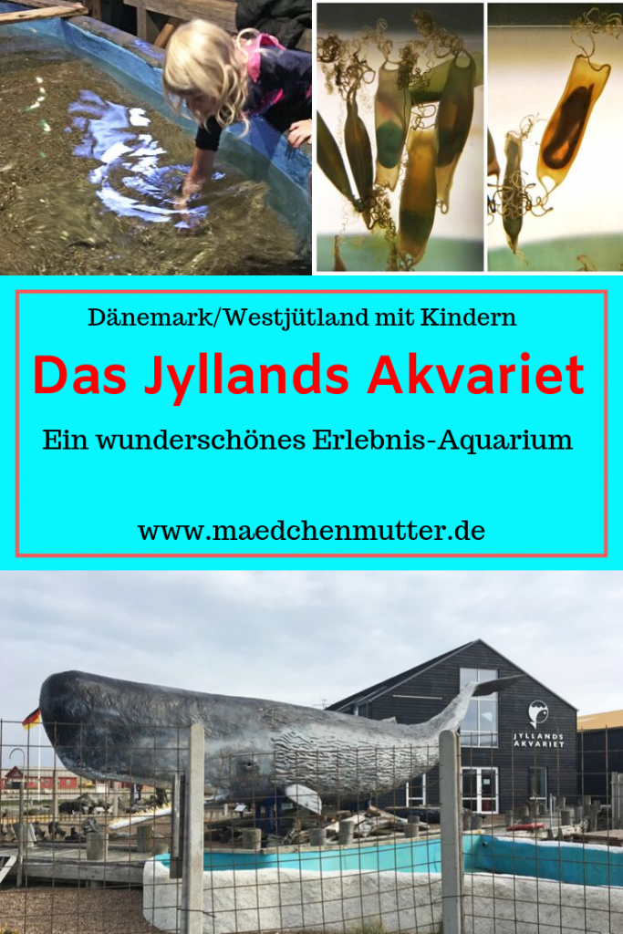 Dänemark Urlaub Kinder Westjütland Aquarium Jyllands Akvariet