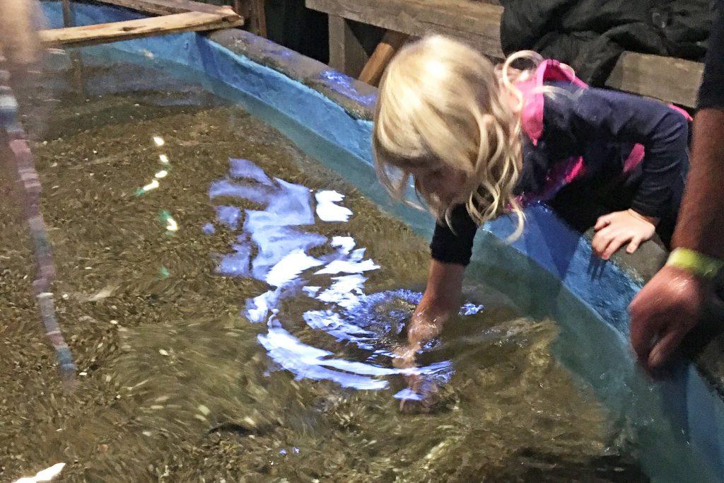 Streichelbecken-Aquarium-Thyborøn-Daenemark Urlaub Kinder Hund
