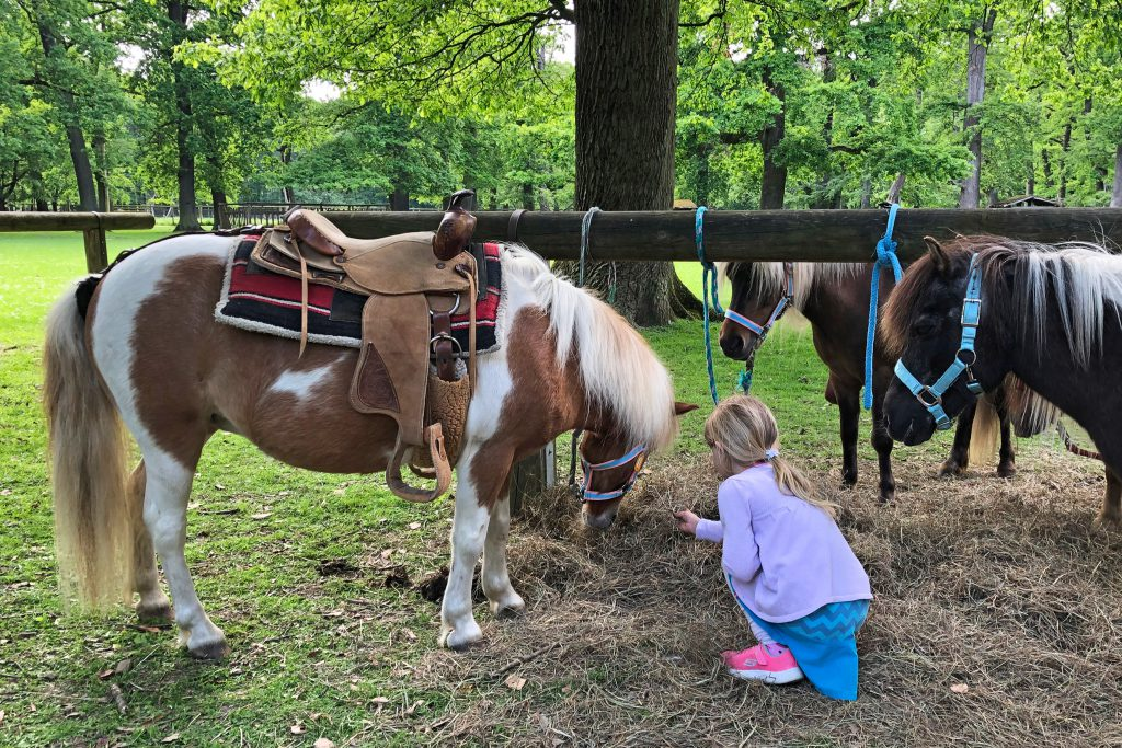 Ponyreiten-Wisentgehege-Rudeltage